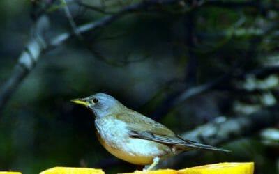 庭の鳥たち
