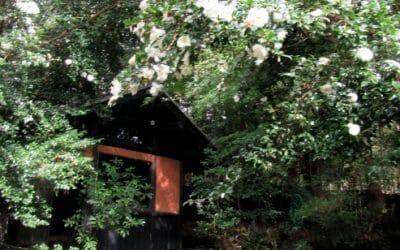赤松の湯の花びら