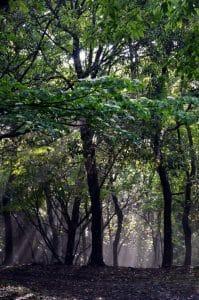 朝日と森1