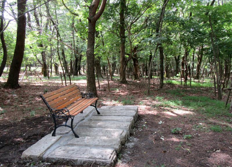 森の休憩1web