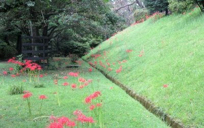 彼岸花の季節