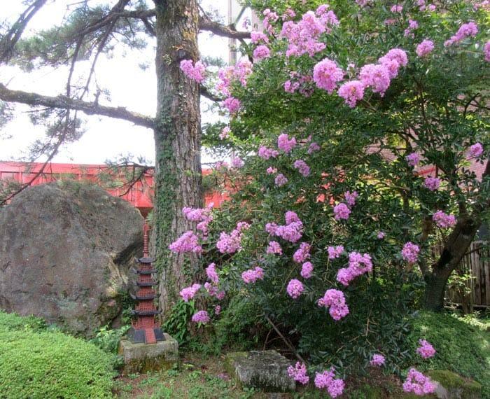 彼岸花と百日紅(サルスベリ)